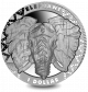 Big 5: The Elephant - 2019 Uncirculated Cupro Nickel Coin