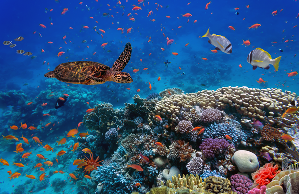 Preserving the Oceans
